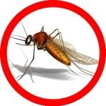 insektenschutz fliegengitter
